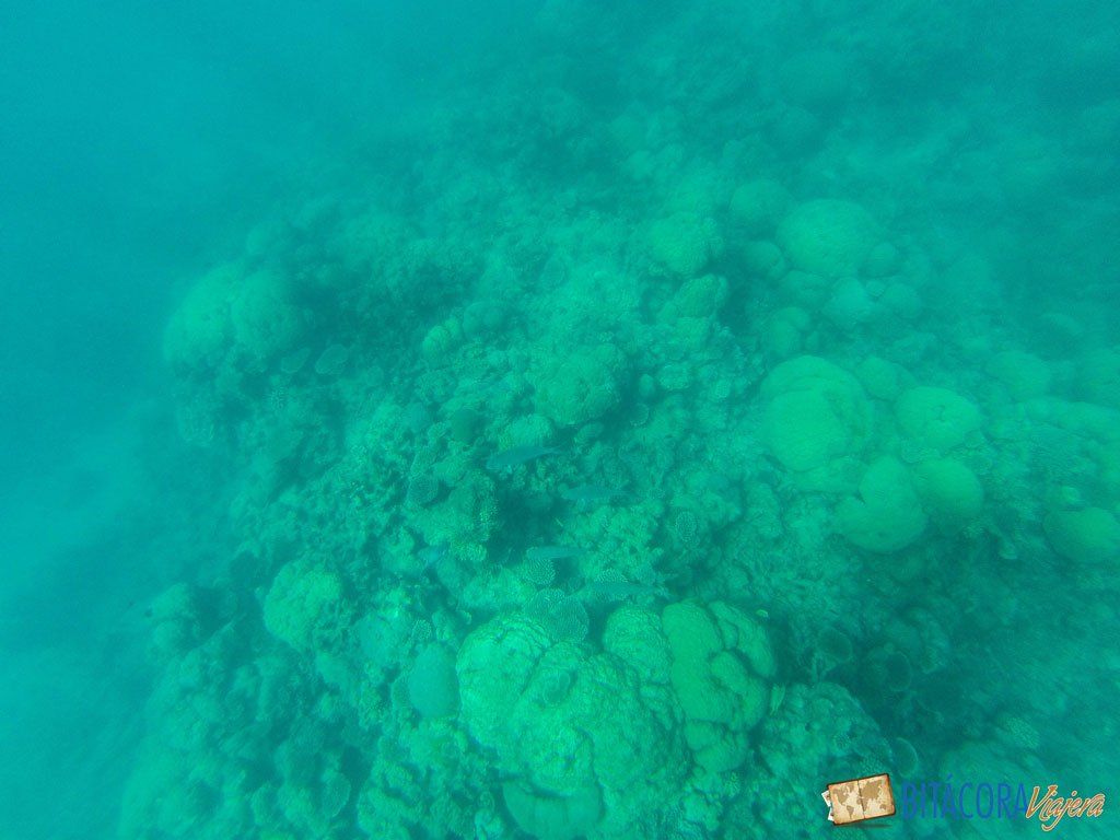 gran-barrera-de-coral-3