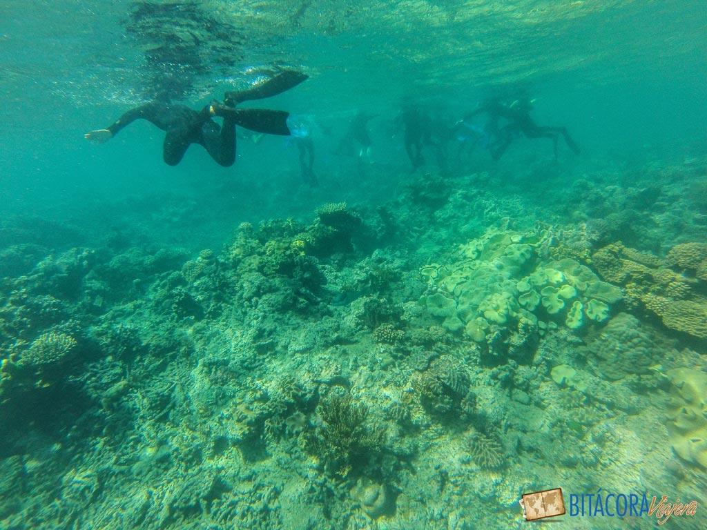 gran-barrera-de-coral-4