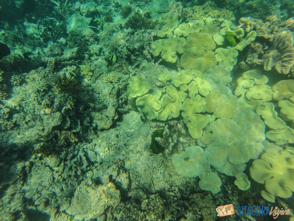 gran-barrera-de-coral-6