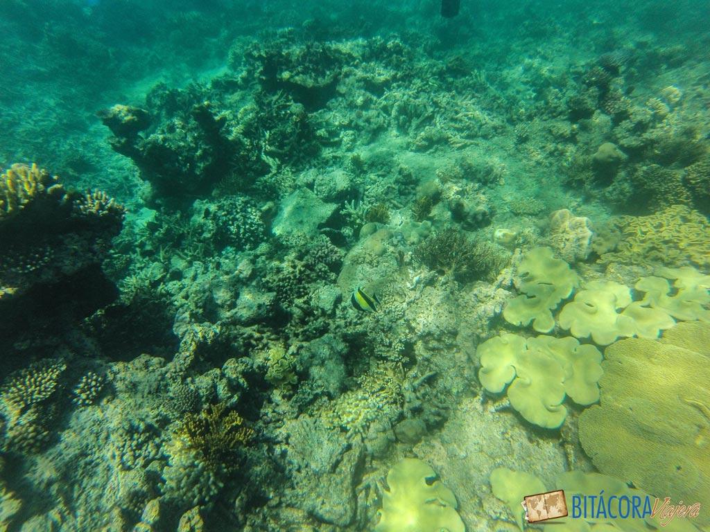 gran-barrera-de-coral-7