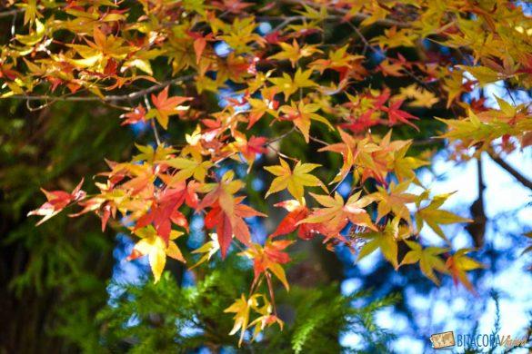 otoño en nikko japon