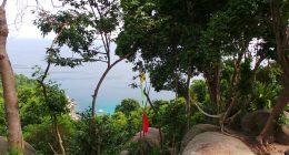 mango-viewpoint